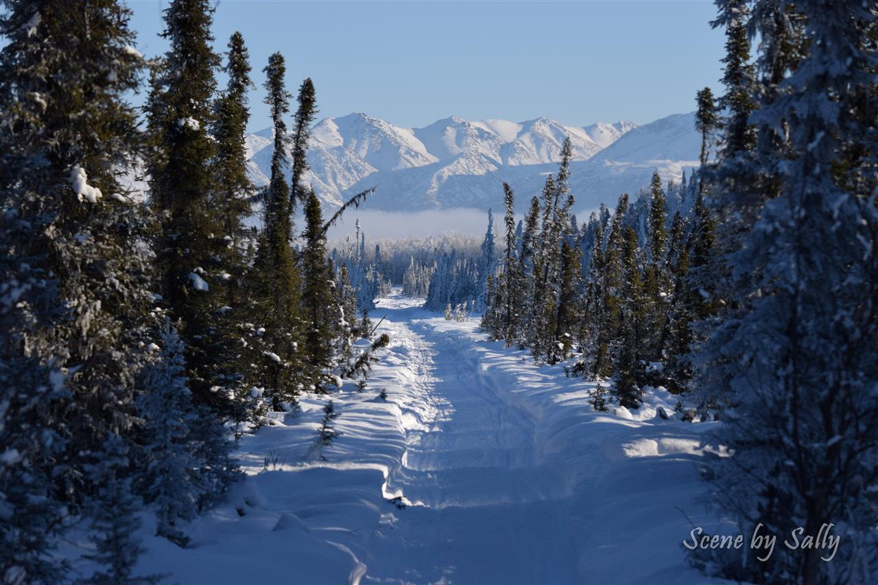 Snow machine trail near Pt. MacKenzie, Alaska