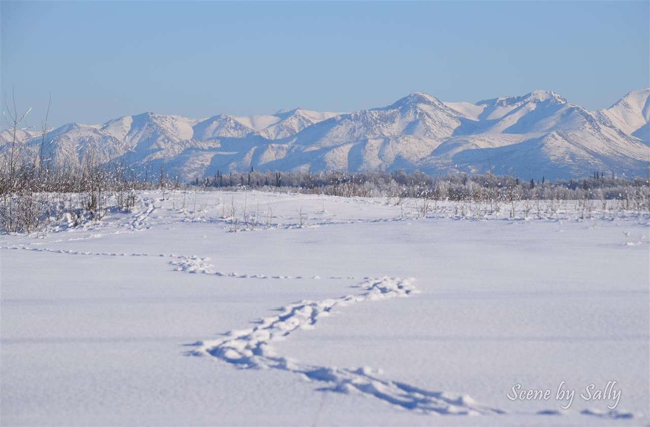 Moose tracks in the snow, Pt. MacKenzie, Alaska