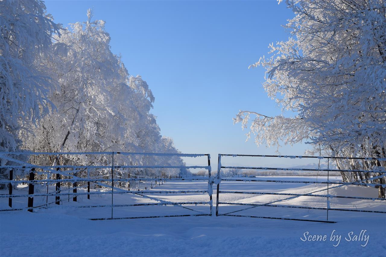 Frosty winter scene, Pt. MacKenzie, Alaska