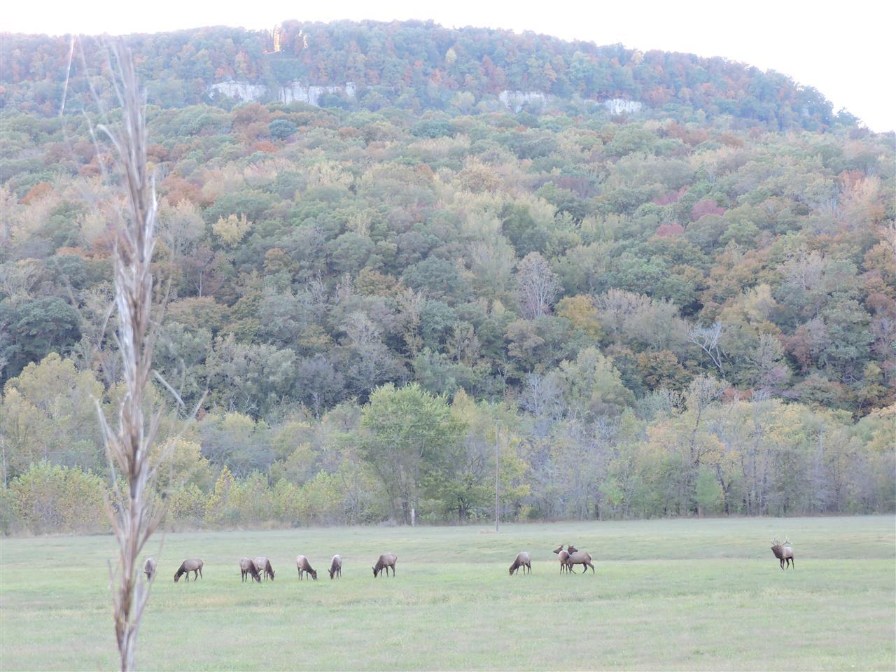 Elk Herd, Ponca Arkansas
