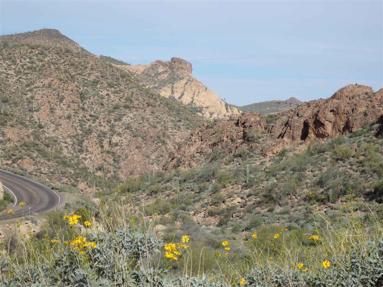 Sonoran Desert AZ
