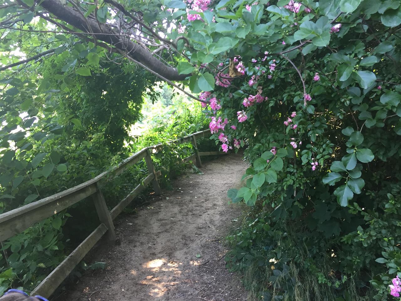 Eel River Walk, Plymouth, MA