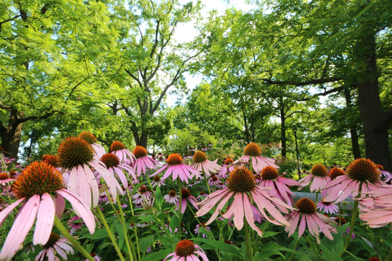 #leadingrelocal #FarbachWernerNaturePark #ColerainTownship #CincinnatiOhio #pinkflowers