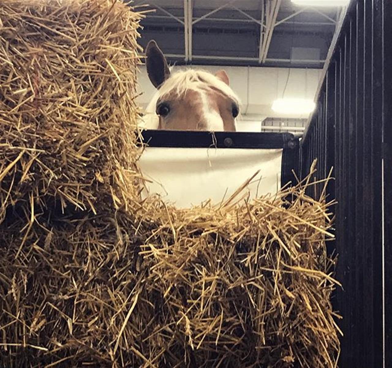 Hay there! ? #indystatefair #indianastatefair #hayisforhorses #carpentercares #LeadingRELocal
