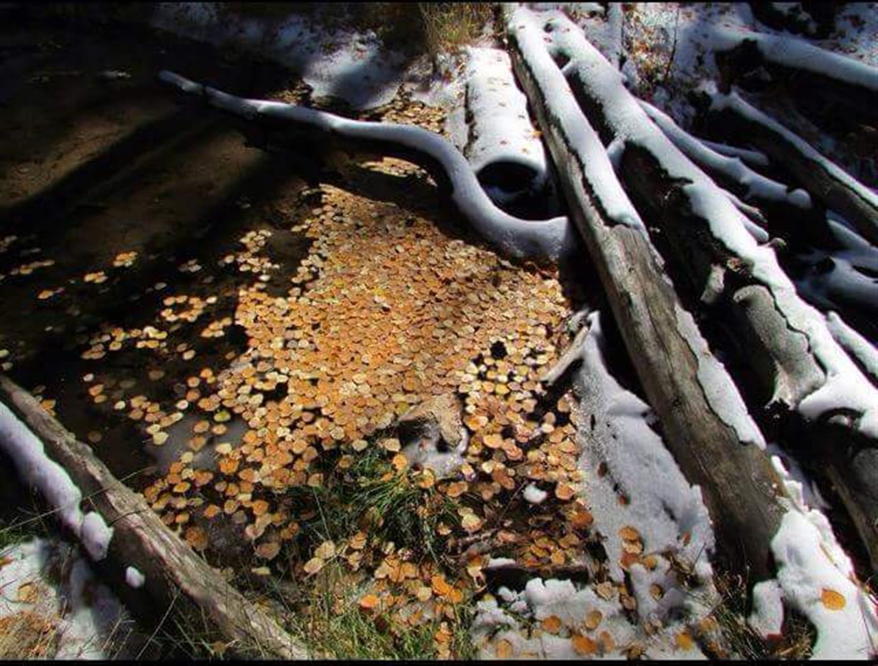 Winter to Fall in Hyde Park - Santa Fe, NM