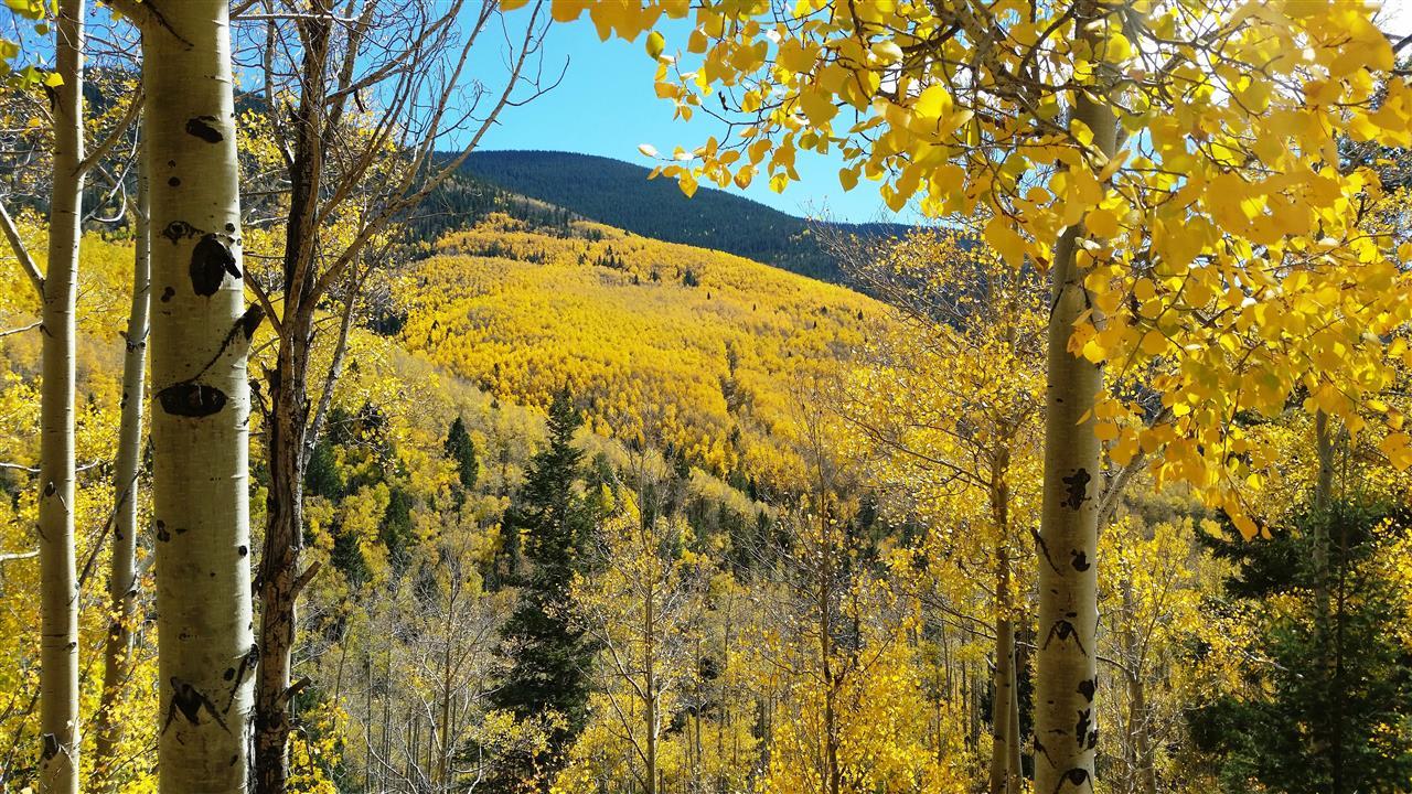 Fall in Hyde Park - Santa Fe, NM