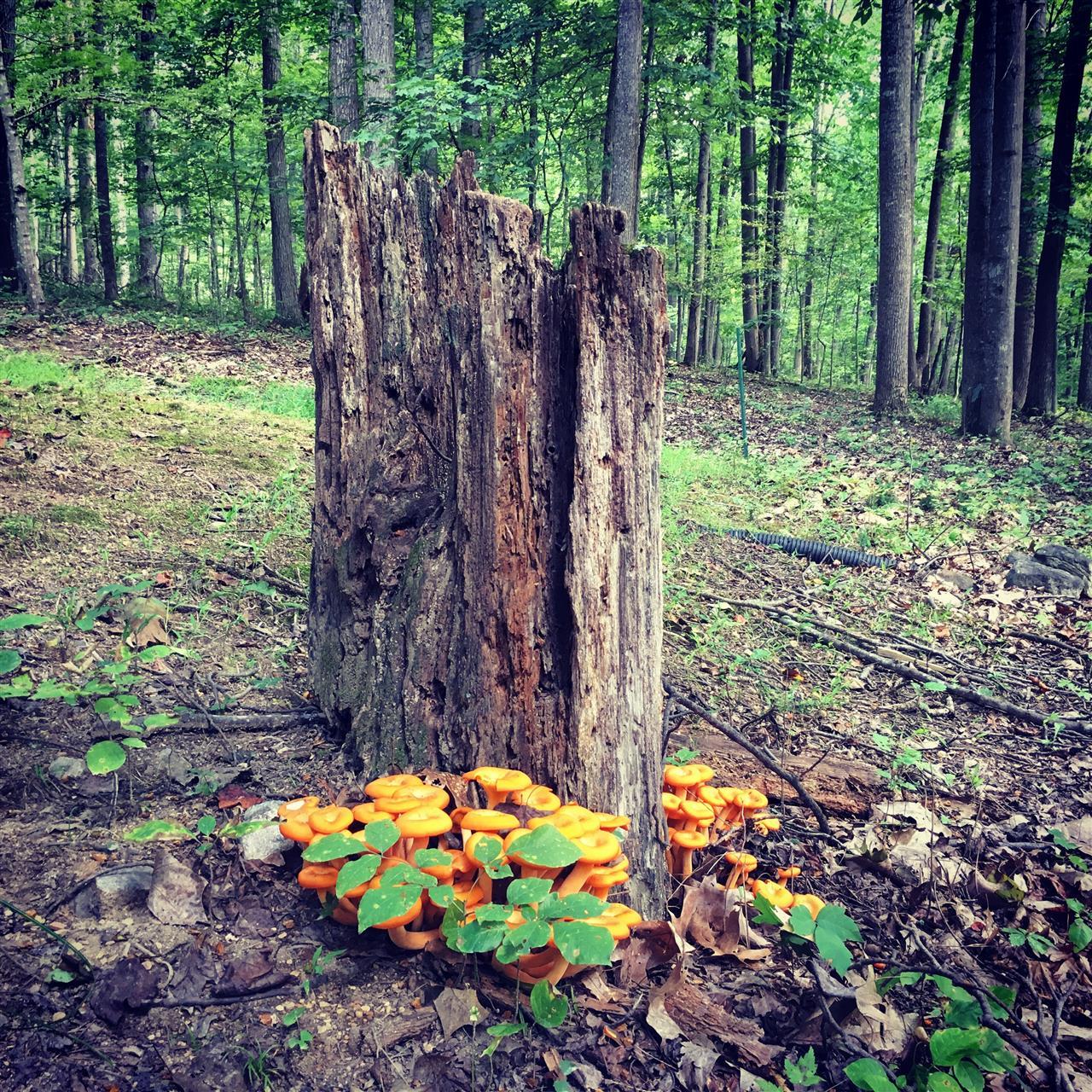 Mushrooms in new market, va