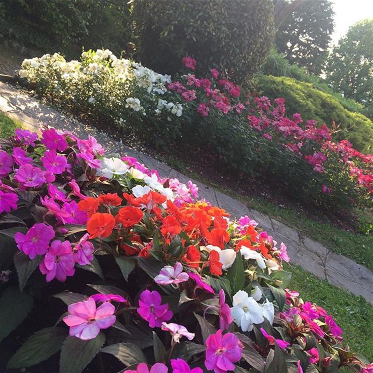 #goodmorning #flowers #brianza #cercocasa #italianlifestyle #leadinrealestatecompaniesoftheworld #leadingrelocal #househunting #buongiorno #colors #solocosebelle #happydays #smile #anzanodelparco #villeinvendita #como