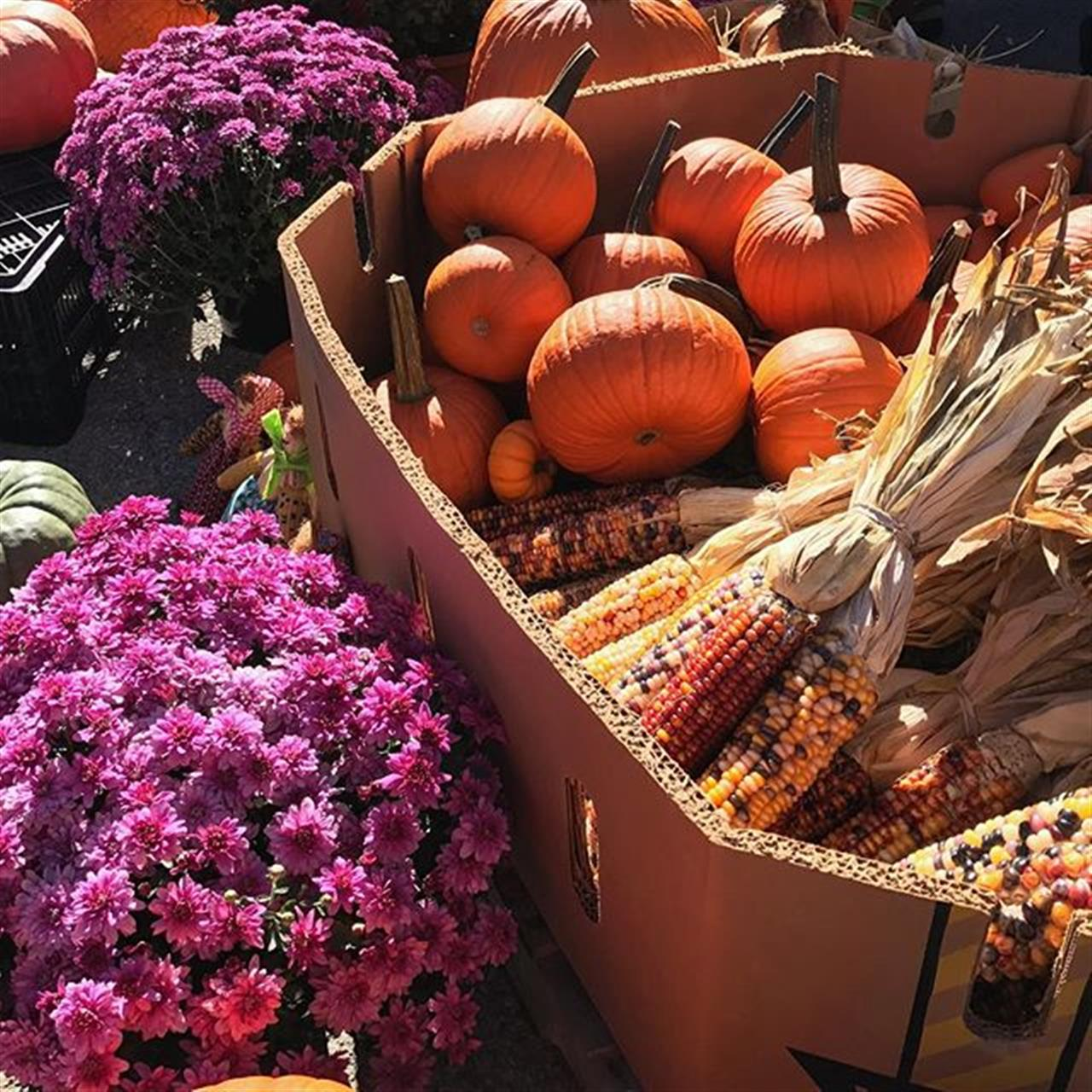 Fall Harvest Festival #fallharvest #fallharvestfestival #photography #photooftheday #chromatic #picoftheday #fall #farmersmarket #instagood #indiana #mobilephotography #mobile #iphonepic #art #fineart #fineartphotography #autumn #autumnharvest #leadingrelocal #carpentercares