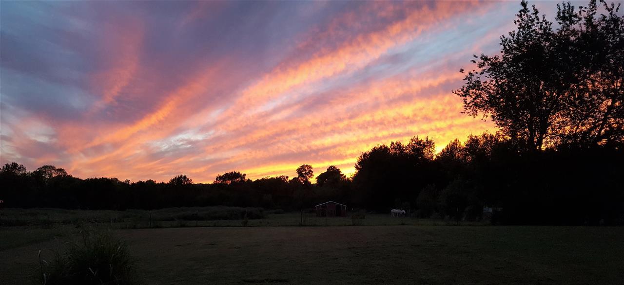 Janet Parker, Crye-Leike, Smyrna, TN My backyard view Murfreesboro, TN