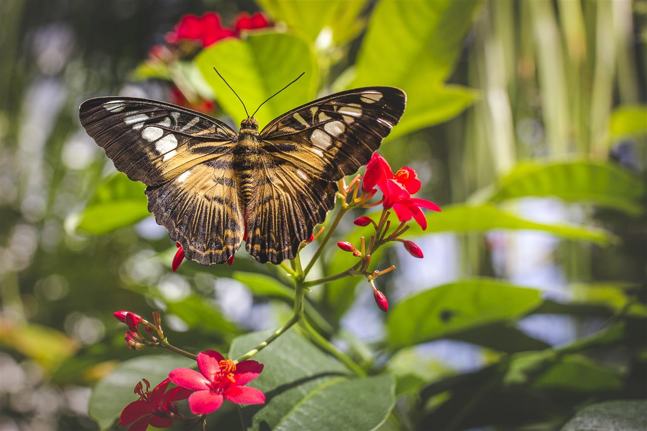 The Butterfly Rainforest at the Florida Museum of Natural History 3215 Hull Road Gainesville, FL 32611 #GainesvilleFL