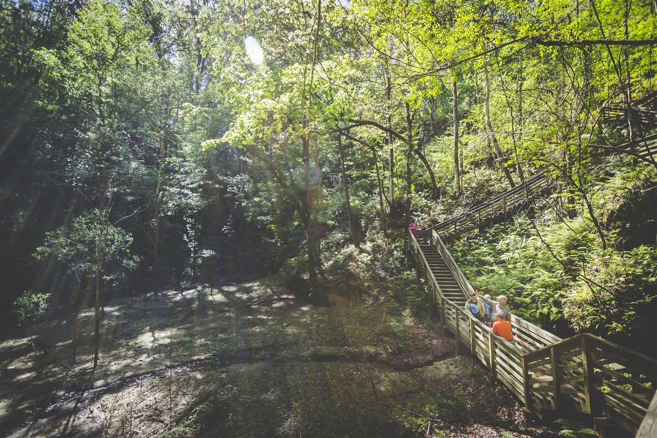 "Devil's Millhopper Geological State Park ""Sink Hole"" 4732 Millhopper Road Gainesville, FL 32653 #GainesvilleFL"