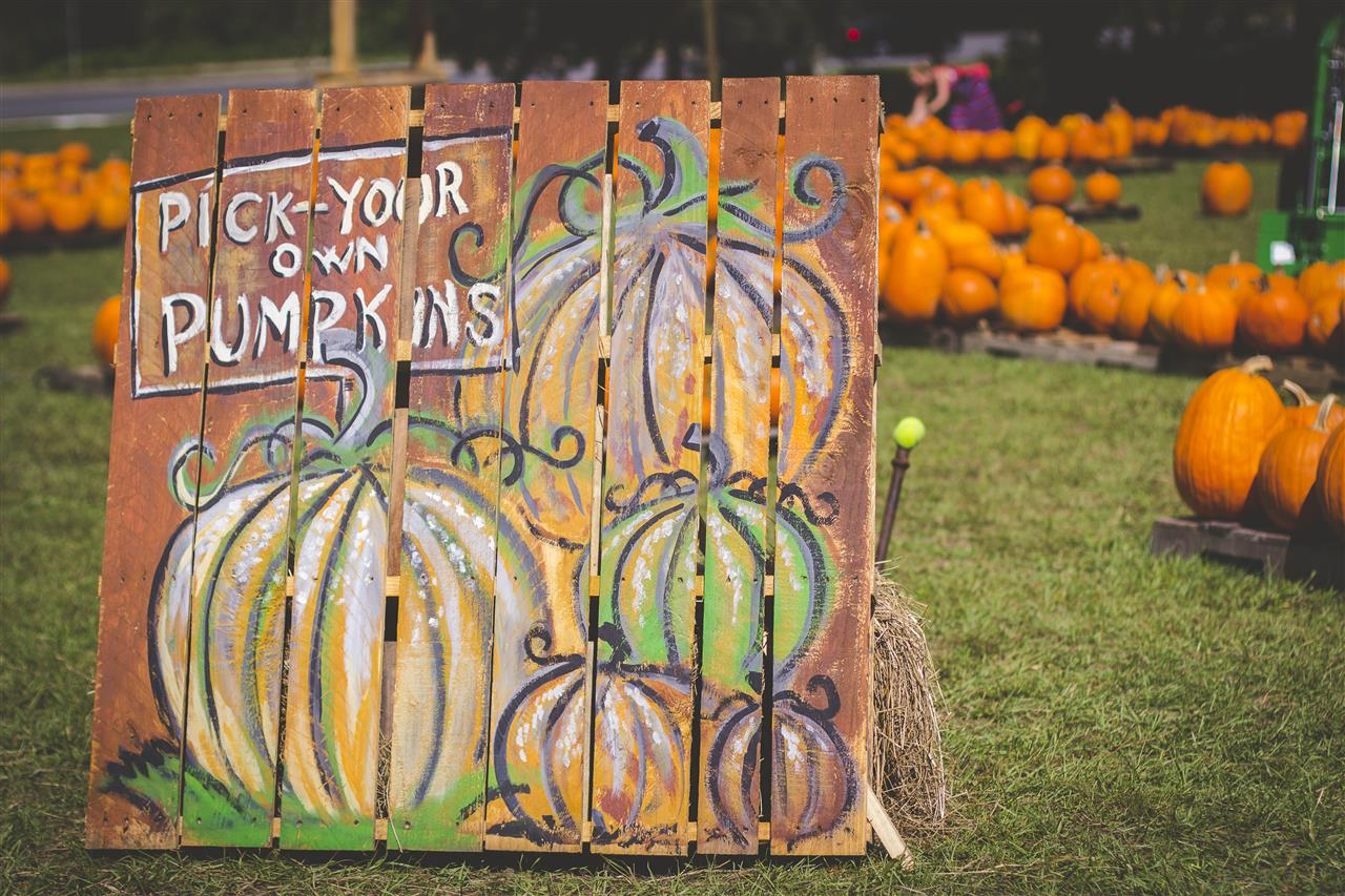 Pumpkin Patch #GainesvilleFL
