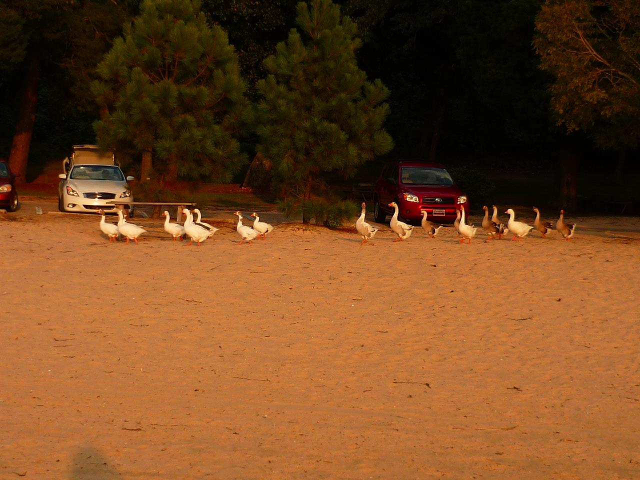 Ducks, North Beach Park, Fairhope, AL by Casey P