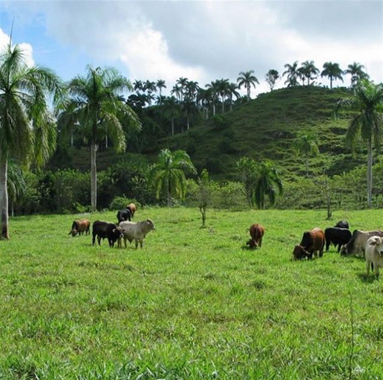 Beautiful farmland in the hills of Abreu near Cabrera for sale. Click on the bio above ?to get more details. #farmland #farm #farming #domininicanrepublicrealestate #Cabrera #cattleranch #cattleranching #leadingrelocal