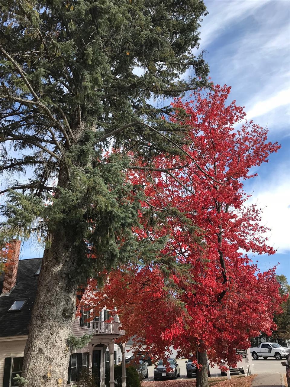 Foliage, Holderness, NH