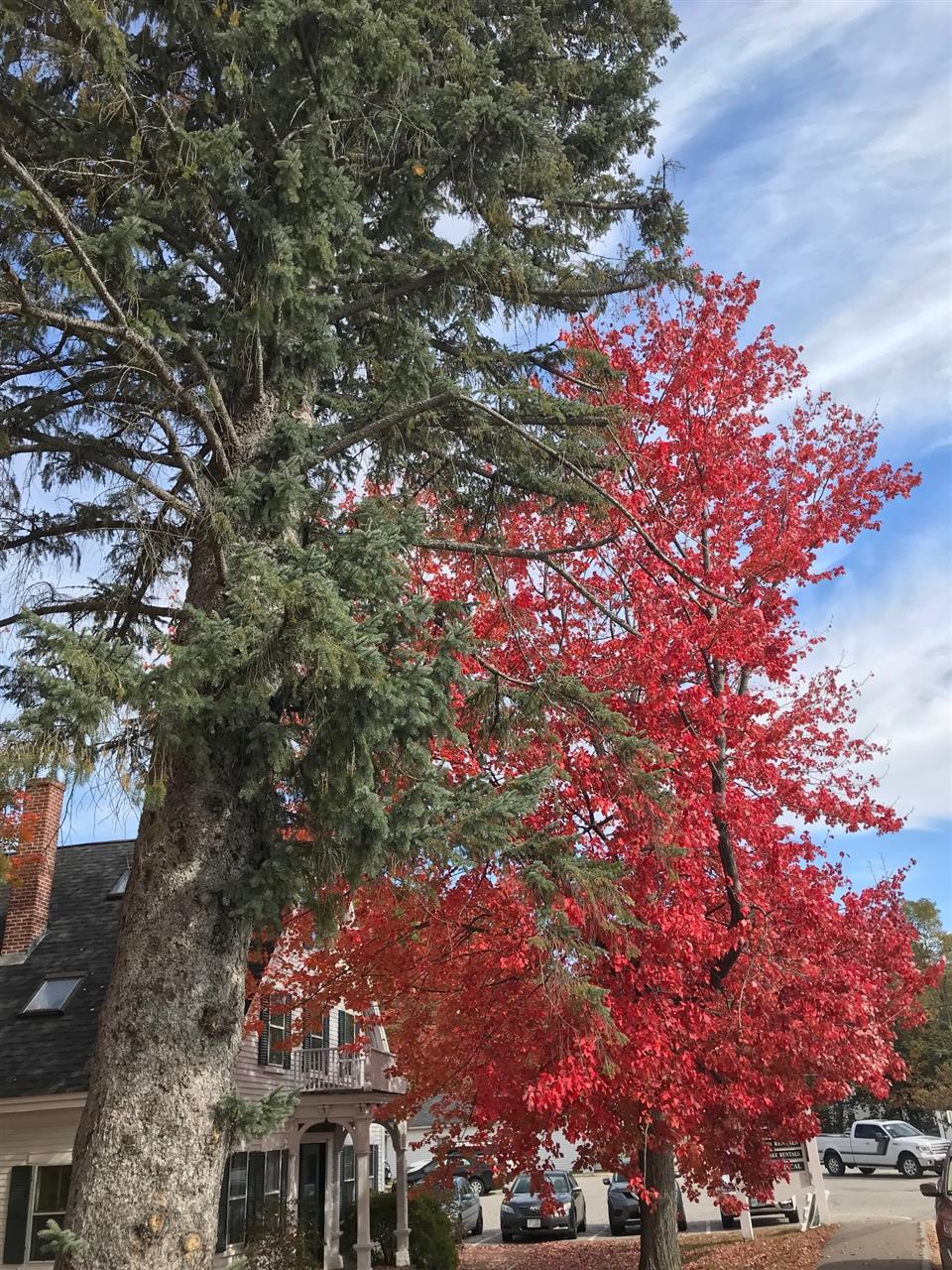 Festive Fall Foliage, Holderness, NH