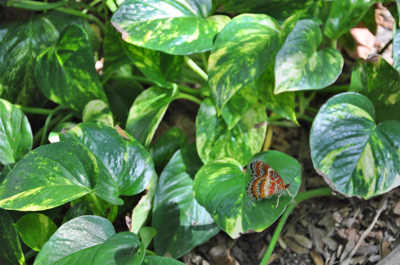 Butterfly in Callaway Gardens.
