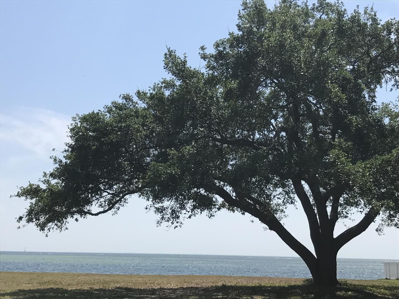 Shore Acres-St.Petersburg, FL