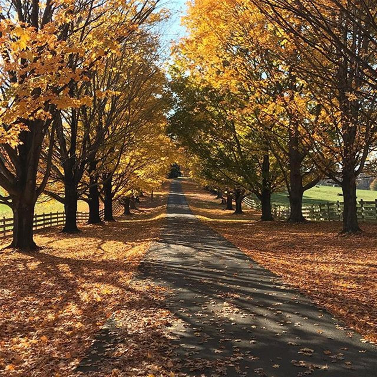 The wild world of real estate can lead you to beautiful places.  #nofilterneeded #fall #virginiaisforlovers #beautifulday #fallyall #foliage #serenity #realestate #realtor #shenandoahvalley #leadingre #virginia #nofilter ?? ??