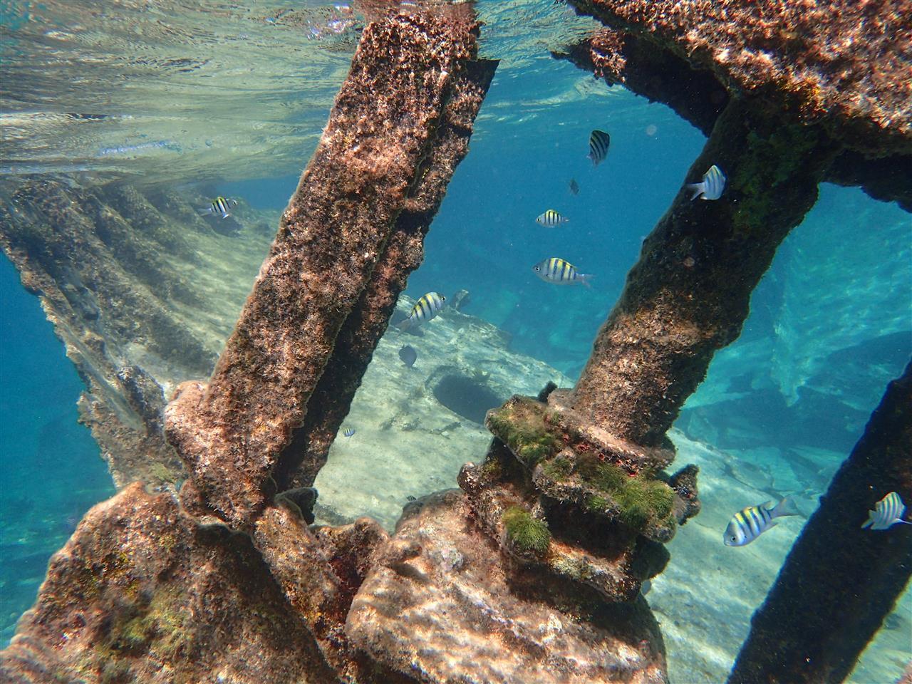 Cayman underwater
