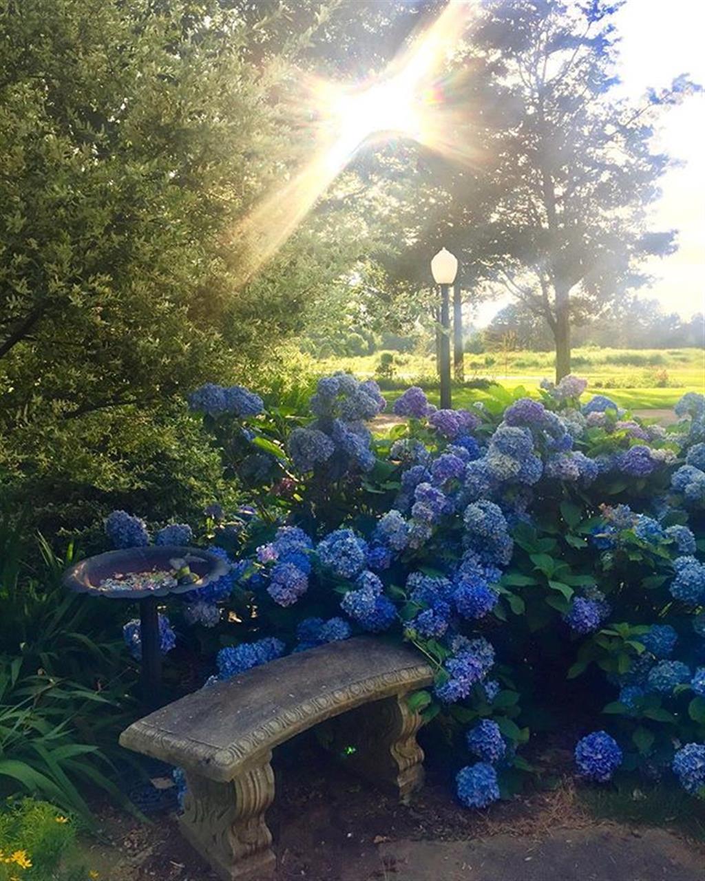 Hidden gems in #glenellyn #chicagosuburbs #flowers #parks #spring #leadingrelocal #chicago #westernsuburbs
