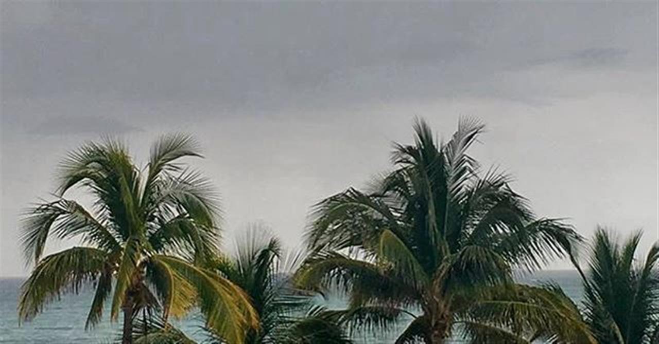 It even rains in paradise. #miami #rain #rainyafternoon #palmtrees #flordia #winterescape #tbt #vacationspot #chicago #leadingrelocal #bairdwarner #neighborhood