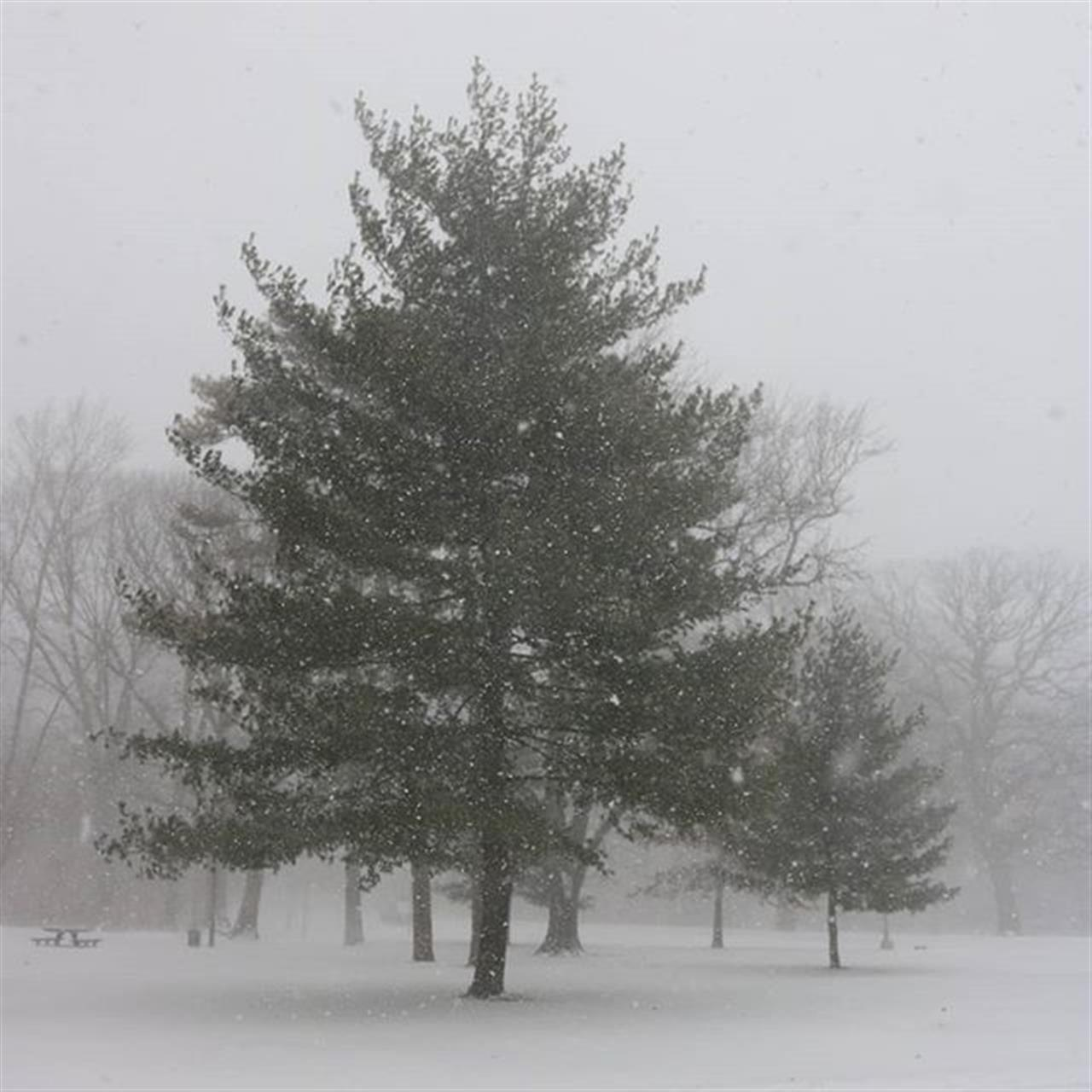 #prospectpark #trees #tree_magic #parks #picballot #eye_for_earth #snowstorm #snowÔØä #naturelover #naturephotography #nature #yourshot #beautifulday #beautiful #Exploreyourhood #leadingrelocal #itsthesimlpethings #itsamazingoutthere #Grayson #winterstormgrayson2018