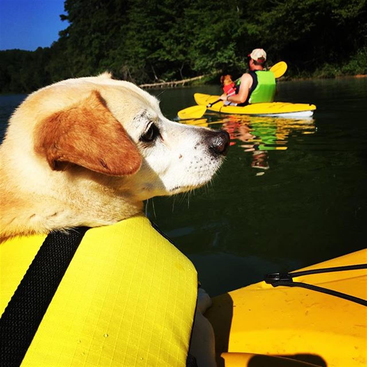 No walk for this pup this morning, just a trip on the lake. #kayakingwithdogs #boonecarlsons #leadingrelocal #boonenc #blowingrocknc