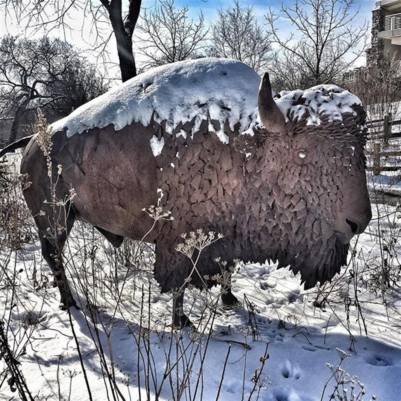 Peggy NotebaertÔÇÖs bison #LivingWellinChicago #realestate #leadingrelocal #chicago #howtosellyourhome #bestjobintheworld #diverseyharbor  #peggynotebaertnaturemuseum  #bairdwarner #findmychicagohome #lincolnpark #cityliving #winterscenes