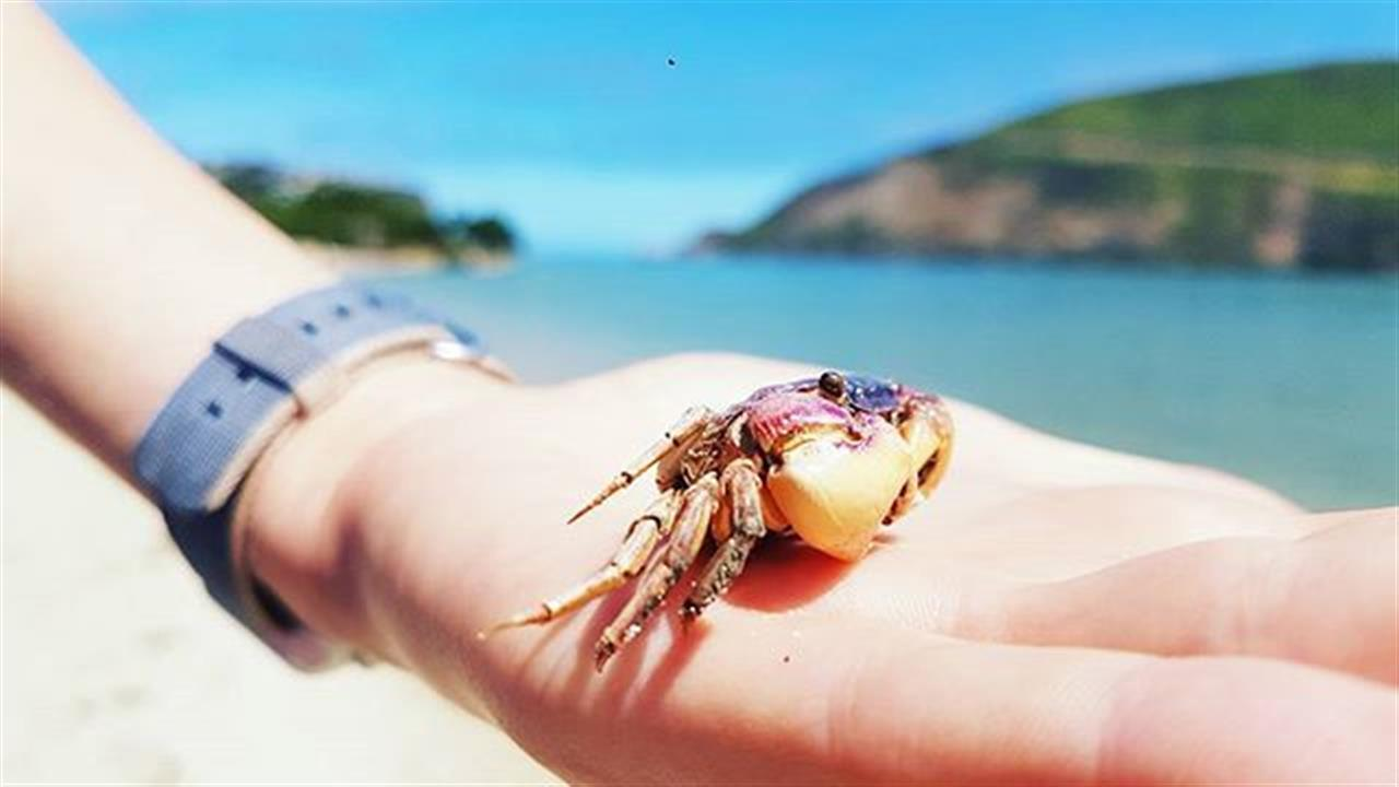 """""""""""A beach is not only a sweep of sand, but shells of sea creatures, the sea glass, the seaweed, the incongruous objects washed up by the ocean."""""""" ÔÇö Henry Grunwald, Journalist  #washeduptreasures #adventureanywhere #quotesforeveryone #quotesdaily #crabbies #knysnaheads #leadingrelocal #knysna #leasureisland #beachday #beachbound # #photography #photooftheday #picoftheday #instagood #inspirationaldestinations"""