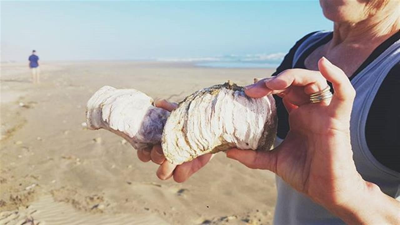 """""""""""We are like seashells upon the beach. Beautiful and unique, each with a story of it's own to tell""""""""  #washeduptreasures #adventureanywhere #quotesforeveryone #quotesdaily #seashells #sedgefield #leadingrelocal #colabeach #beachday #beachbound #photography #photooftheday #picoftheday #instagood #inspirationaldestinations #walkonthebeach #liveoutside"""