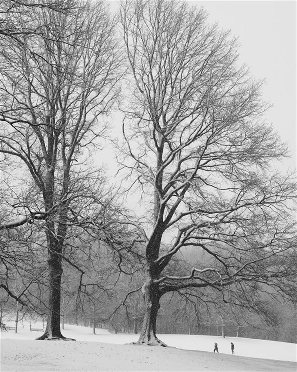 Snowy day in #NYC #Brooklyn #prospectpark I even heard thunder several times during the day. #trees #tree_magic #snow #parks #blackandwhite #naturephotography #naturelover #nature #beautiful #snowstorm #picballot #eye_for_earth #wildlife #Exploreyourhood #leadingrelocal #yourshot