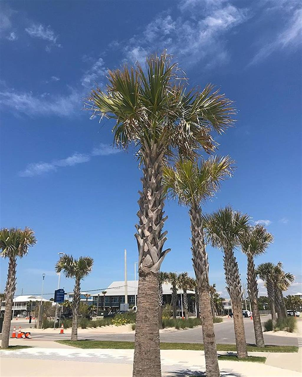 Happy Friday from sunny #gulfshoresalabama. ÔÿÇ Loving the new construction to our stunning, public beaches! #FindYourChampion . BellatorAL.com . . . . . . . . . . #beach #realestate #realtors #beachday #saltlife #community #coastal #alabama #gulfcoast #alabamagulfcoast #beauty #palmtrees #sand #realtors #leadingrelocal #condosforsale #beachrealestate #vacationhome #luxurylifestyle #luxuryliving #luxuryportfolio #orangebeachal #onoisland #baldwincounty #pensecola