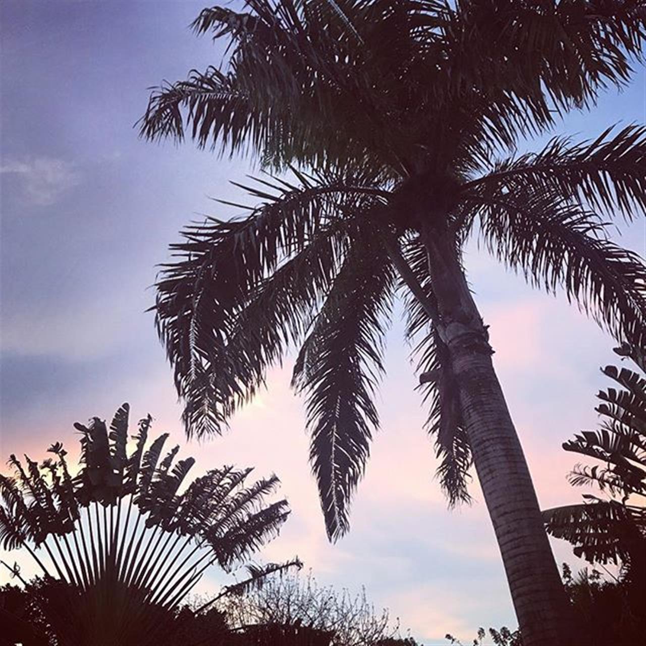 Wishing you all a happy Friday evening! #fridaymood #palms #naturephotography #naturelovers #tropicalnight #caribbean #leadingrelocal