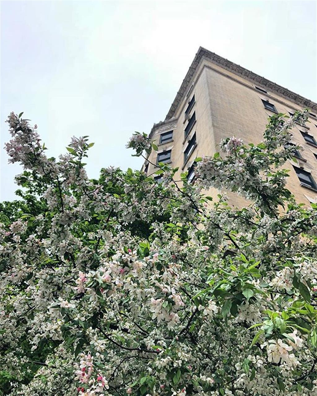 Love this burst of flowers against historic #ChicagoArchitecture .. .. #illinoisrealestate #chicagorealestate #chicago #leadingrelocal #bairdwarner #springflowers #flowers #lakeview #lake