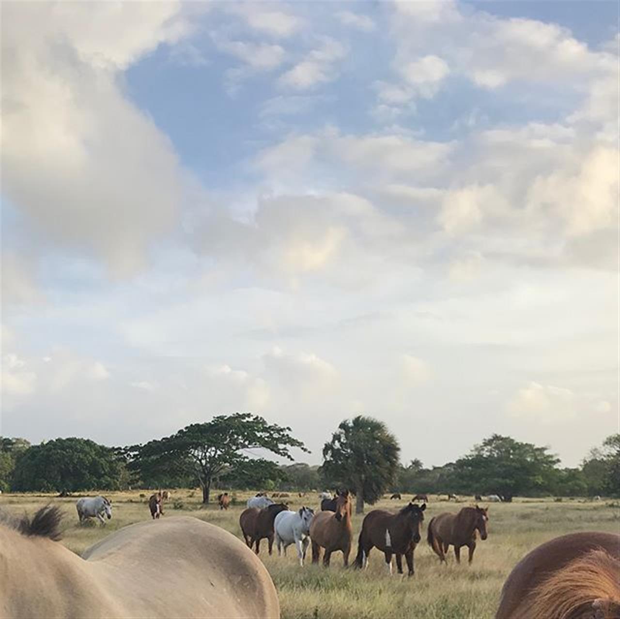 Just Beautiful! #horsesofinstagram #horsebackriding #caribbeanlife #horse #lifestyle #leadingrelocal
